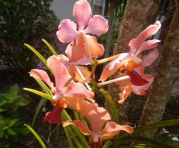 170422-makato-aklan-orchids_001