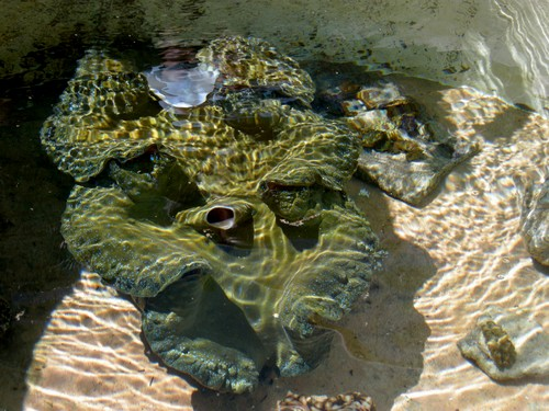 150110-141116-camiguin-giant-clams_003