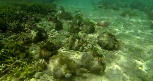150110-141116-camiguin-giant-clams_007