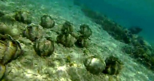 150110-141116-camiguin-giant-clams_008