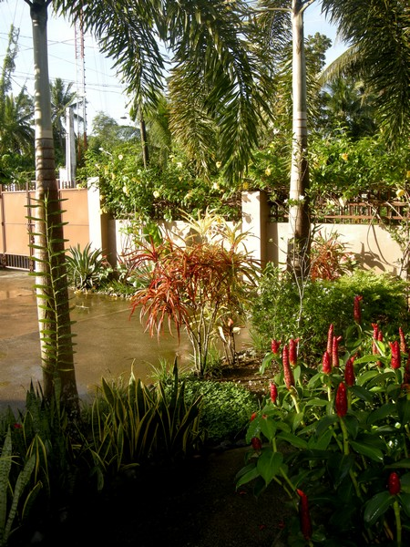 141209-makato-garden_after_hagupit_001