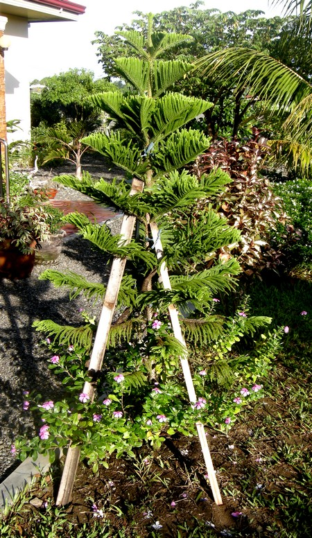 141209-makato-garden_after_hagupit_003